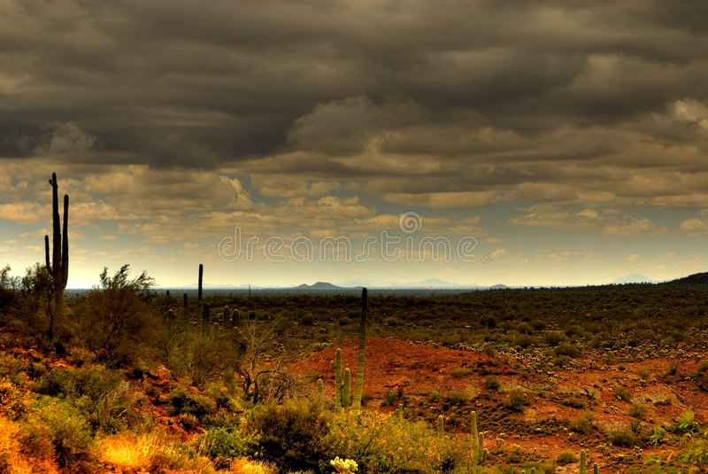 saguaro för 80 öken royaltyfri foto