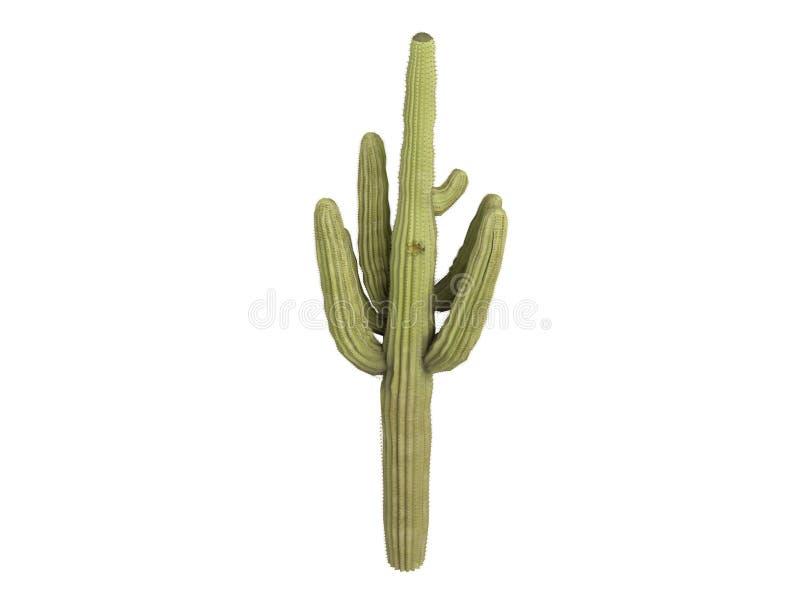 saguaro gigantea carnegiea ελεύθερη απεικόνιση δικαιώματος