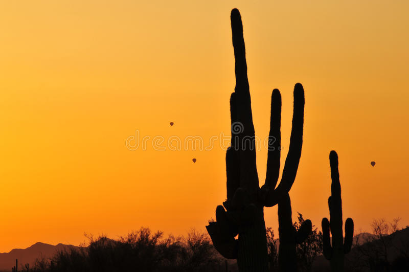 Saguaro kaktus zdjęcie stock