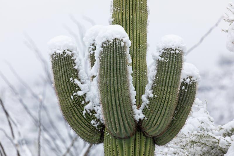 Saguaro kaktus w śniegu fotografia stock