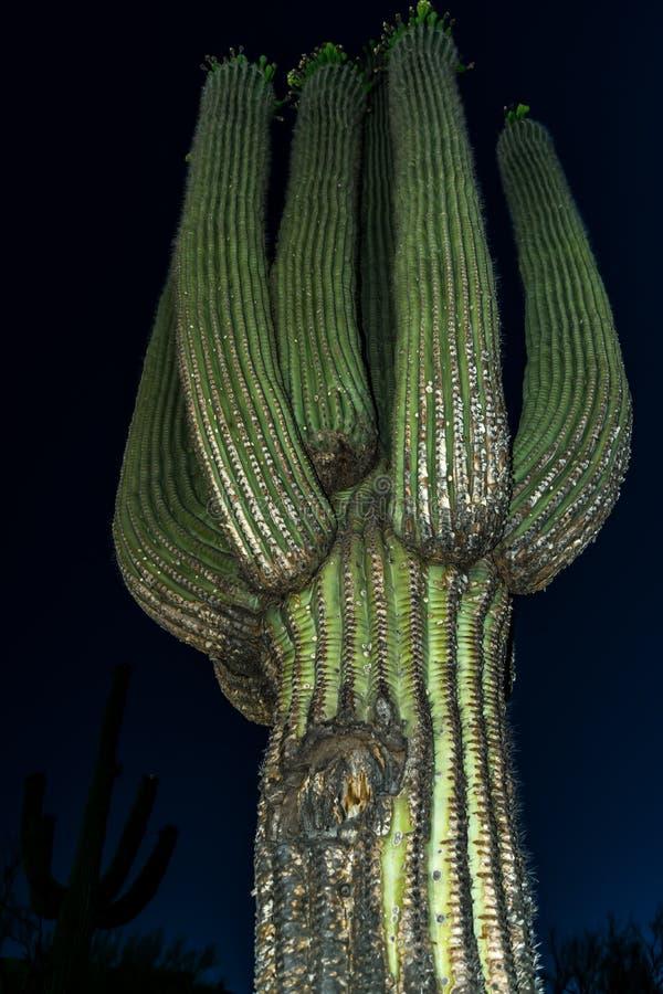 Saguaro kaktus w Arizona przy nocą fotografia royalty free
