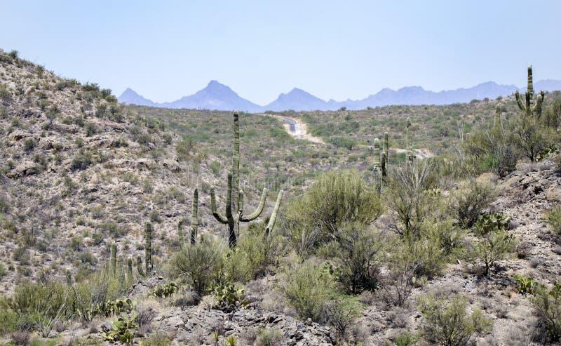 Saguaro-Kaktuswüstenberge, kolossaler Höhlen-Gebirgspark, Arizona stockfoto