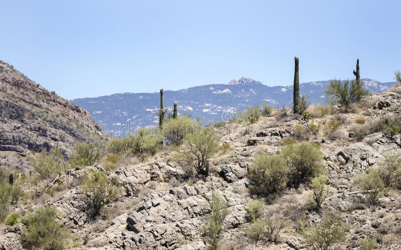 Saguaro-Kaktuswüstenlandschaft, Arizona USA stockbild