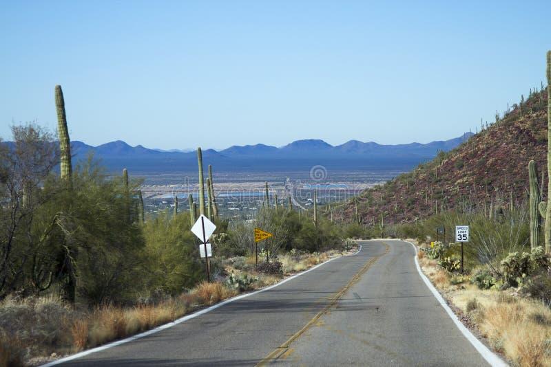 Saguaro Nationaal Park stock afbeeldingen