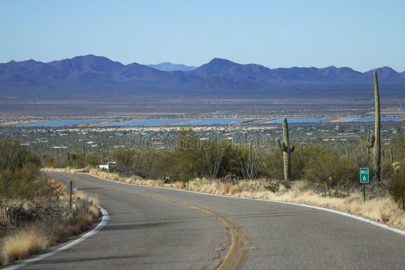 Saguaro Nationaal Park stock afbeelding