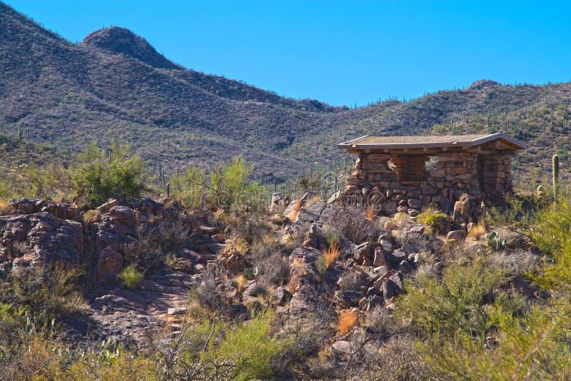 Saguaro Nationaal Park royalty-vrije stock afbeeldingen