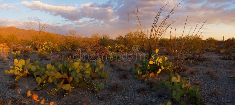 Saguaro National Monument Sunset stock photos