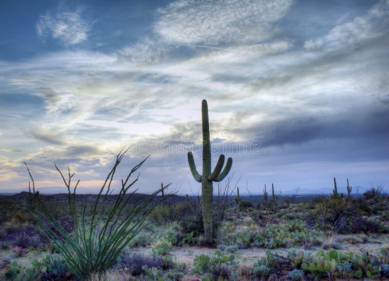 Saguaro National Park, Arizona Desert. Nice spring desert nature scene in Saguaro National Monument, Tucson, Arizona. Saguaros, Ocotilla, Prickly Pear and Palo stock image