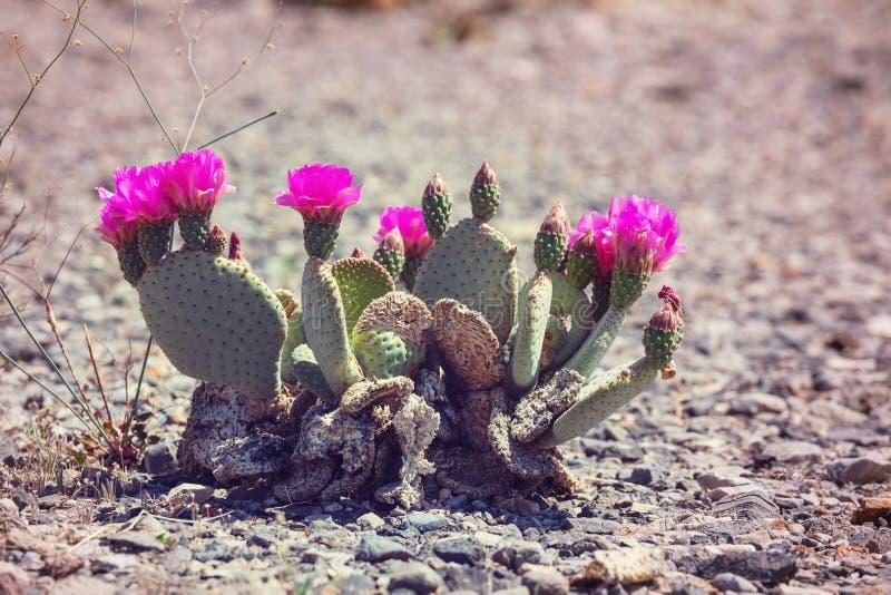 Cactus. Saguaro National Park stock photos