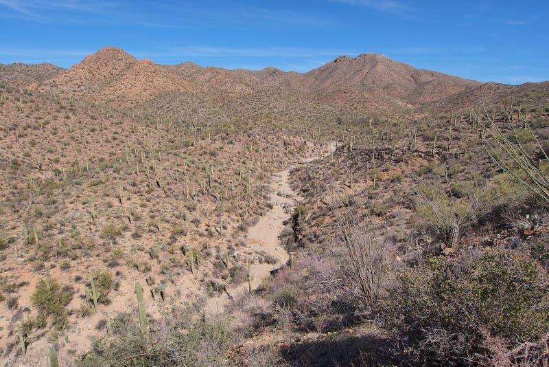 Saguaro-Nationalparklandschaft, Arizona lizenzfreie stockfotos