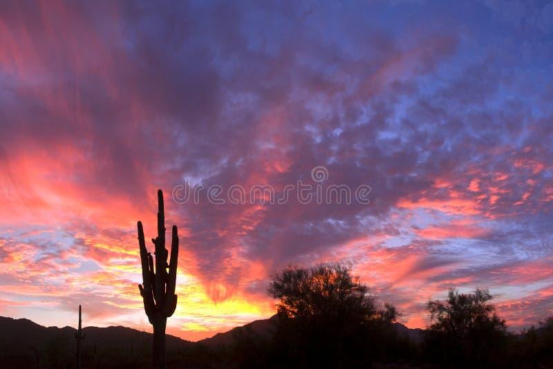 Saguaro Silhouette royalty free stock photography
