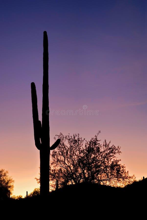 Free Saguaro Silhouette Stock Image - 4843771