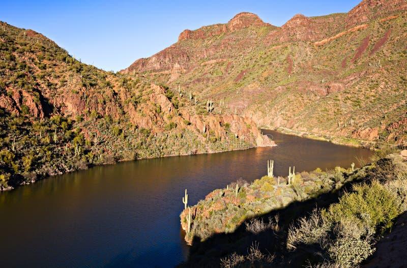 Saguaro sjö royaltyfria bilder