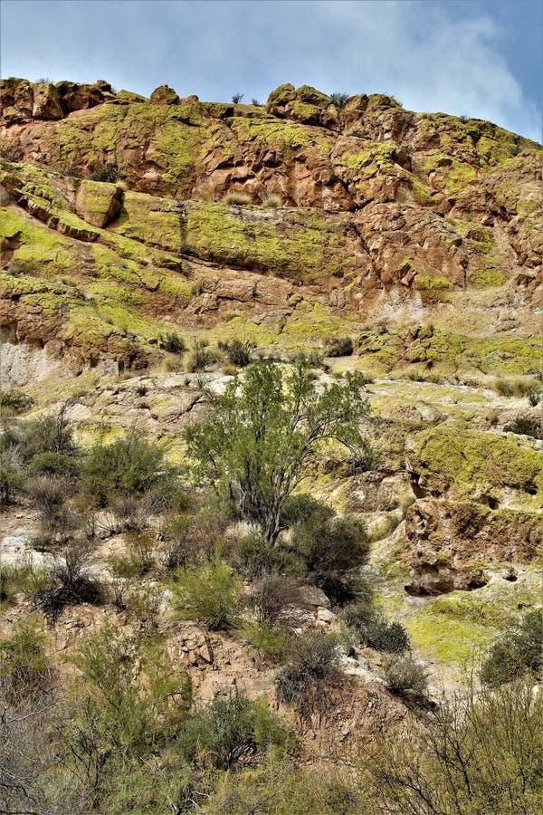 Saguaro sjöbehållare, Maricopa County, Arizona, Förenta staterna arkivfoto