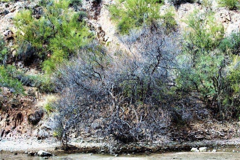 Saguaro sjöbehållare, Maricopa County, Arizona, Förenta staterna arkivbilder