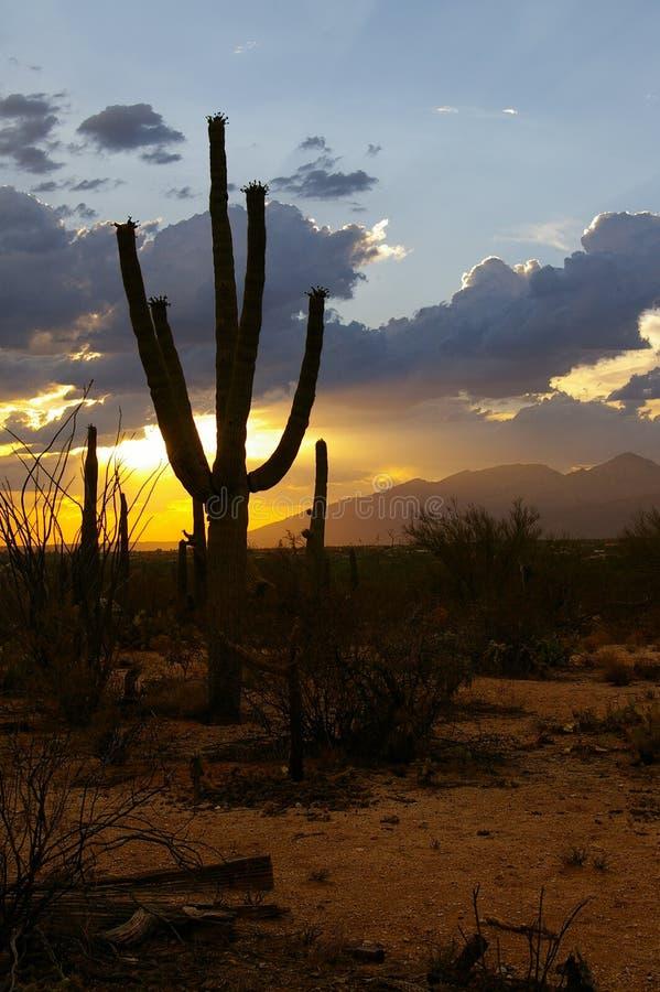 Saguaro-Sonnenuntergang lizenzfreie stockfotos