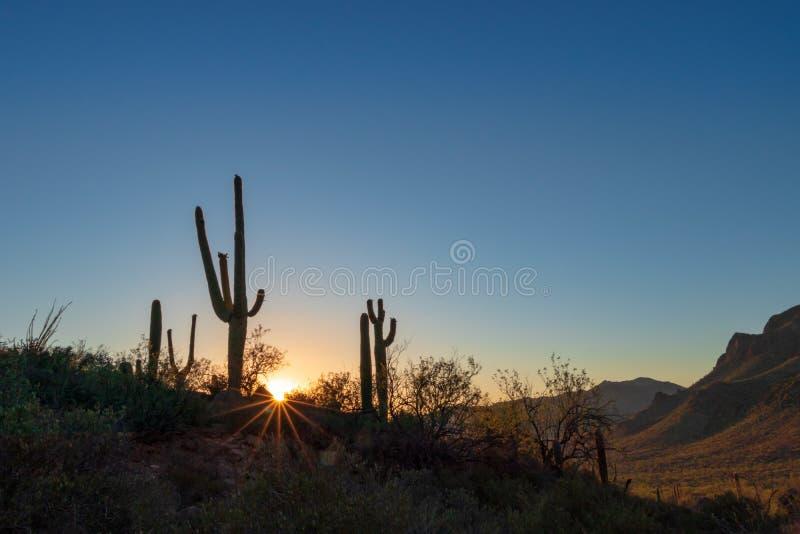 Saguarocactus in de droge woestijn van de zomerarizona bij zonsondergang royalty-vrije stock foto's