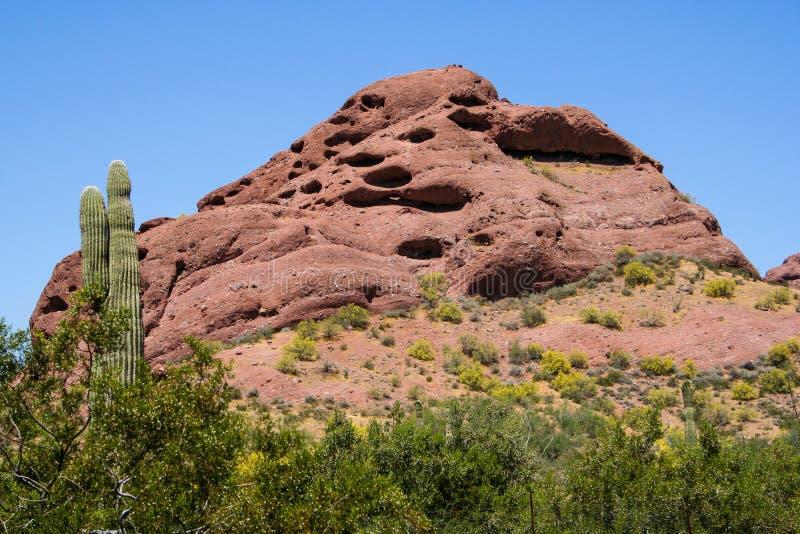 Saguarocactus en Berg stock fotografie