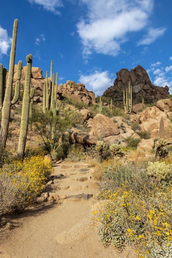 Saguarocactus & Wilde bloemen op Top Piek wandelingssleep in Scottsdale, Arizona stock foto's