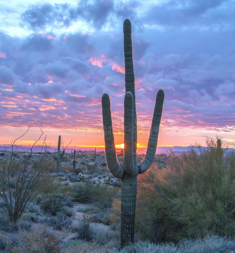 Saguarokaktus bei Sonnenuntergang in Nord-Scottsdale Arizona stockfotos