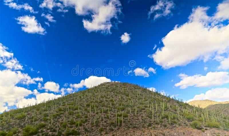 Saguarokaktus Toskaneres Arizona stockfoto