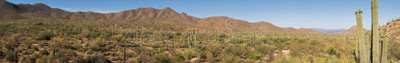 saguaros fotografia royalty free