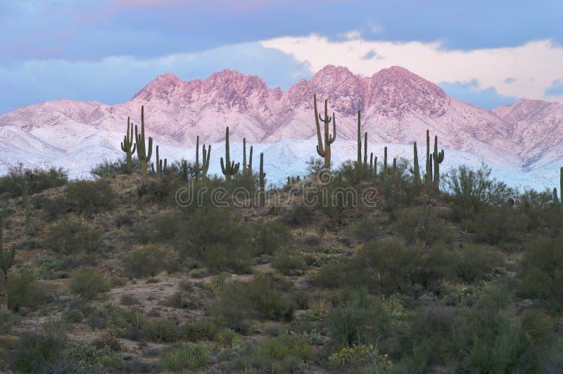 Saguaros con cuatro picos en Alpenglow fotos de archivo libres de regalías