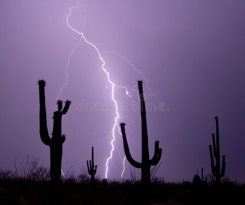 Download The Saguaros are Watching stock photo. Image of thunderbolt - 305928
