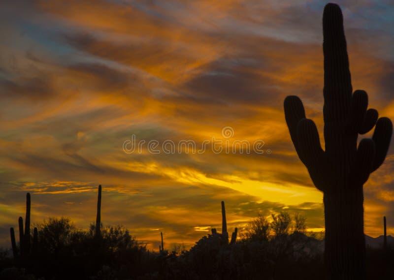 Saguaroskuggor och vibrerande gul solnedgånghimmel av den sydvästliga öknen royaltyfri foto