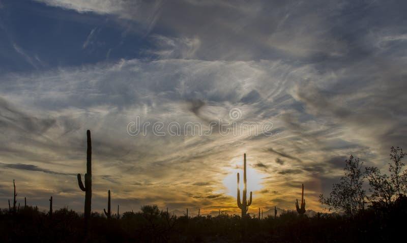 Saguaroskuggor och vibrerande gul solnedgånghimmel av den sydvästliga öknen arkivfoton