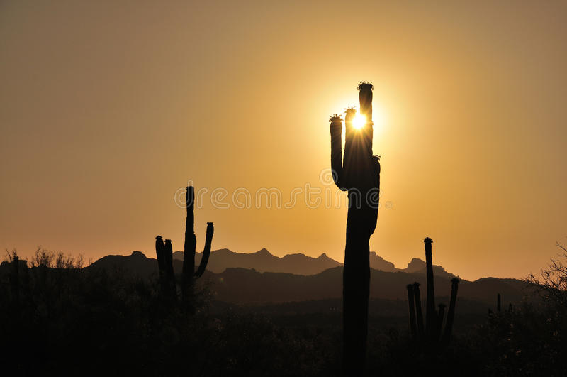 Saguarozonsondergang stock fotografie