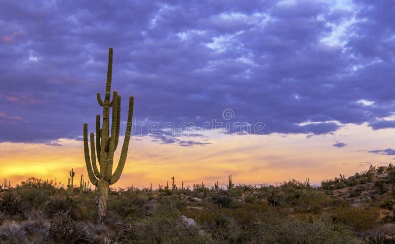 Sagurao Cactus At Sunset In Scottsdale Arizona Stock Photo ...