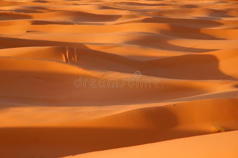 Sahara royalty free stock photos