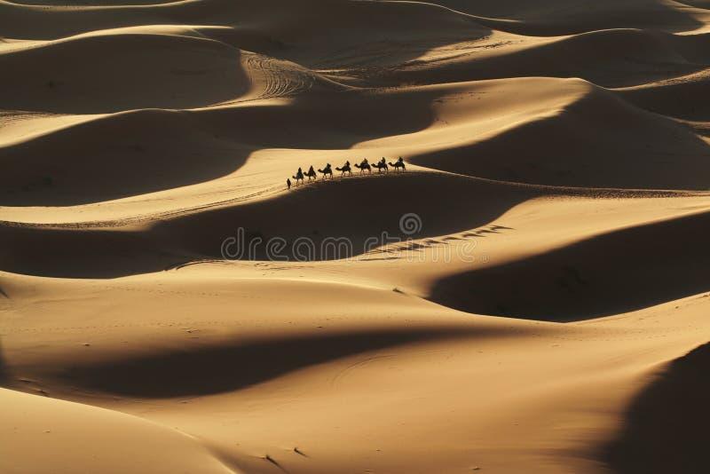 Sahara imagens de stock royalty free