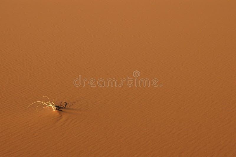 Sahara Desert. The sand dunes of Erg Chebbi in the Sahara Desert stock images