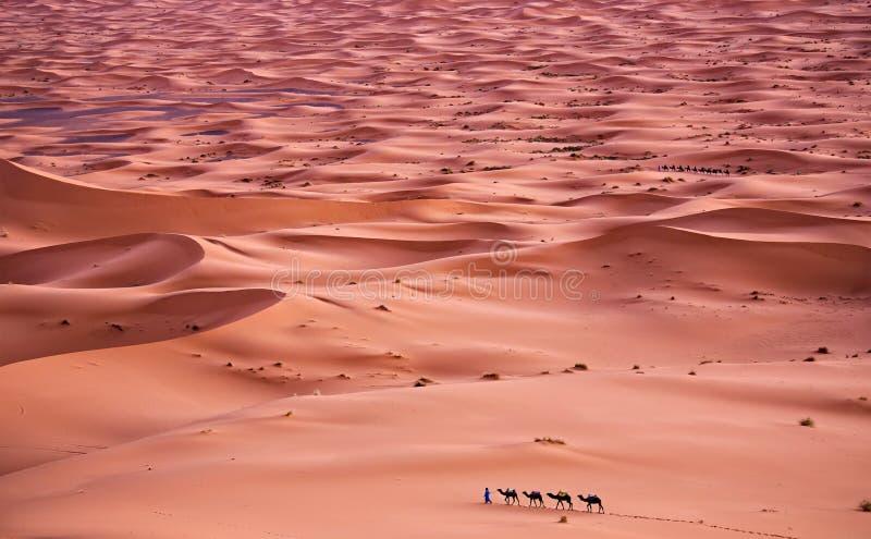 Download Sahara Desert stock foto. Afbeelding bestaande uit hitte - 39115486