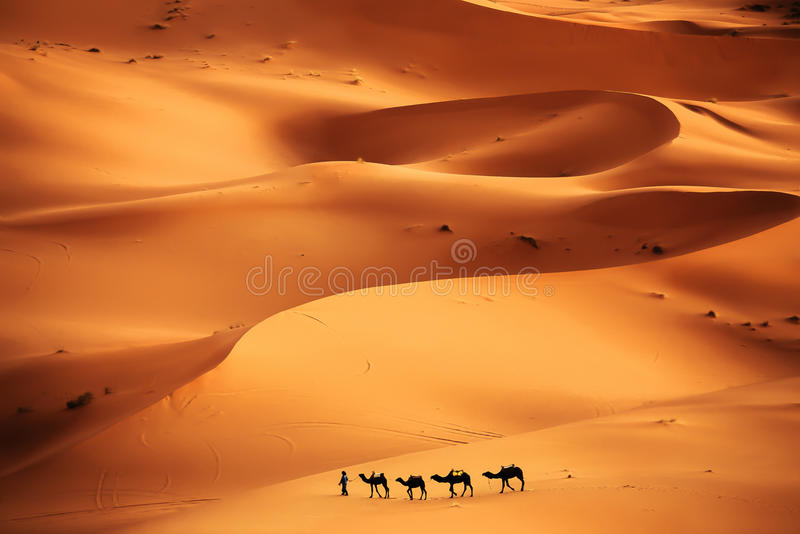 Sahara desert zdjęcie stock