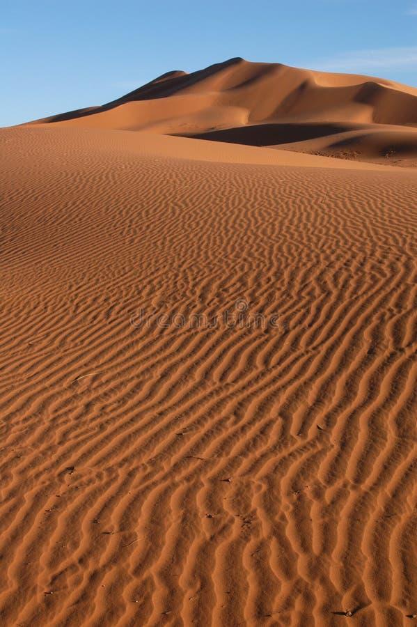 Sahara desert fotografia royalty free