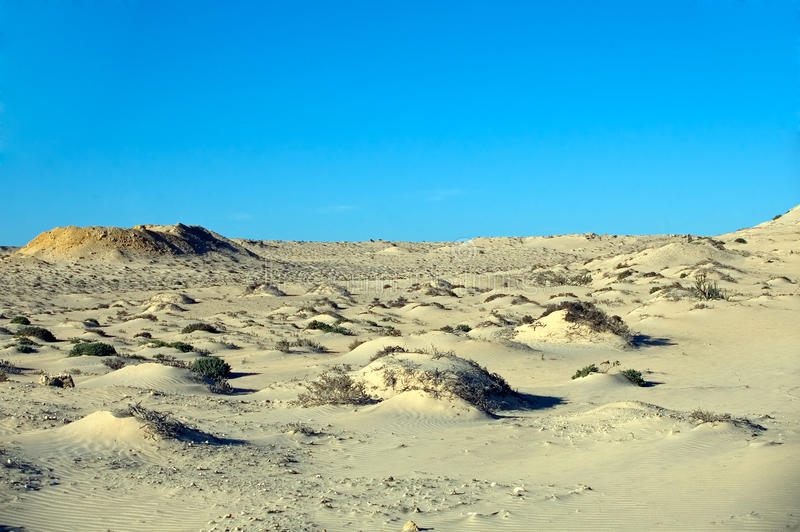 Sahara Desert, Western Sahara royalty free stock images