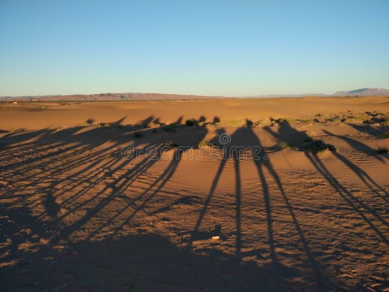 Sahara Dessert lizenzfreies stockfoto