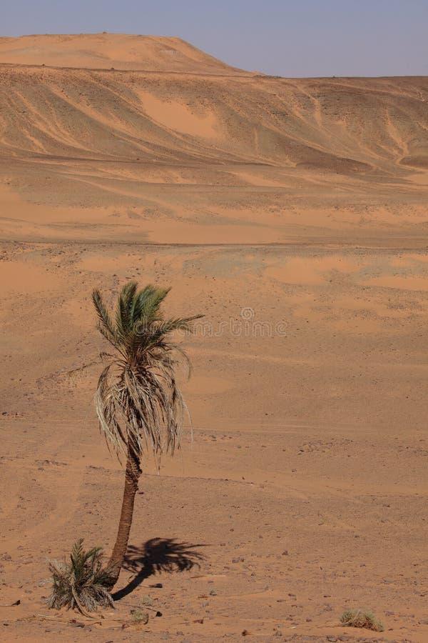 Sahara i Algeriet royaltyfri fotografi