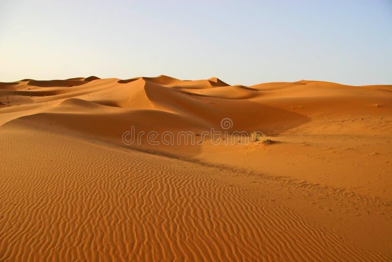 Download Sahara sanddunes stock image. Image of morocco, desolate - 2003681