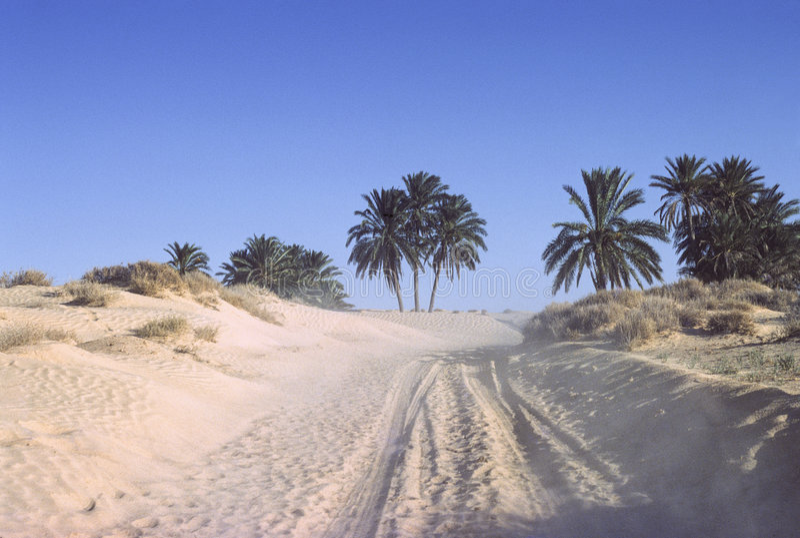 Sahara-Spur stockbild