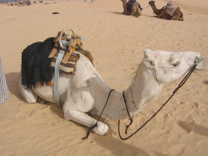 Sahara, Tunezja - fotografia royalty free