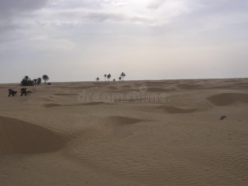 Sahara - Tunisien royaltyfria bilder