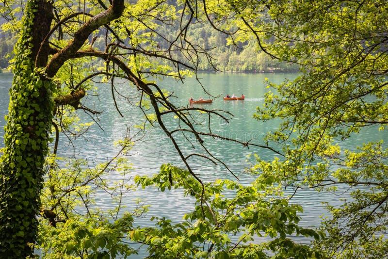 Saigné, la Slovénie - 18 mai 2019 : Touristes heureux ramant dans le bateau plat en bois ayant l'amusement sur le lac saigné en c photographie stock