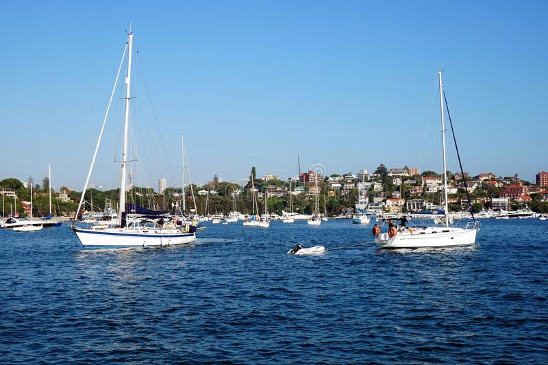 Sail Boats, Rose Bay, Australia royalty free stock photo