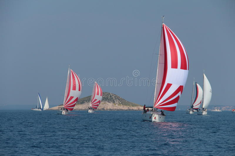 Sail Boats with Spinnakers. With island in background royalty free stock photo
