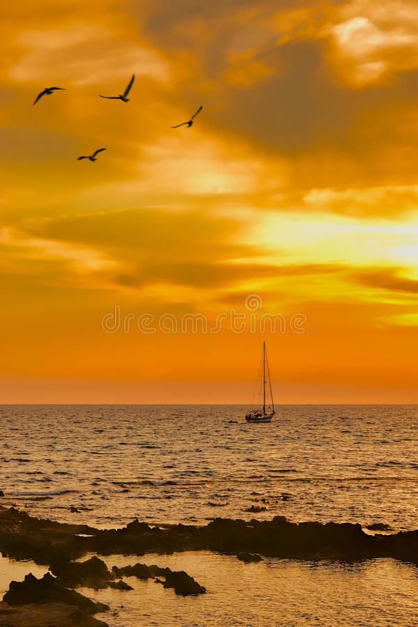 Sailboat leaving at dusk with some seagulls in foreground royalty free stock photo