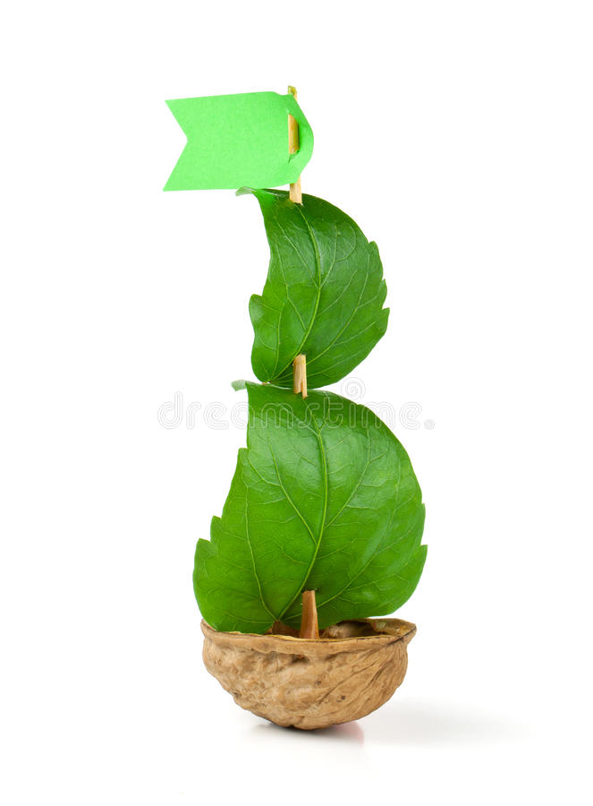 Sailboat made of walnut. With a leaf as sail isolated on white background stock image